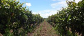 Carmelo: a região vinícola do Uruguai que vai ganhar o seu coração