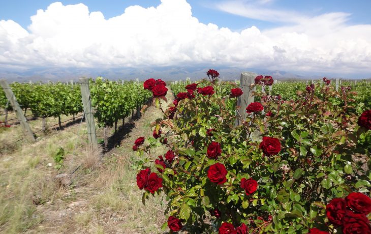 Mendoza: uma enotrip de sonho