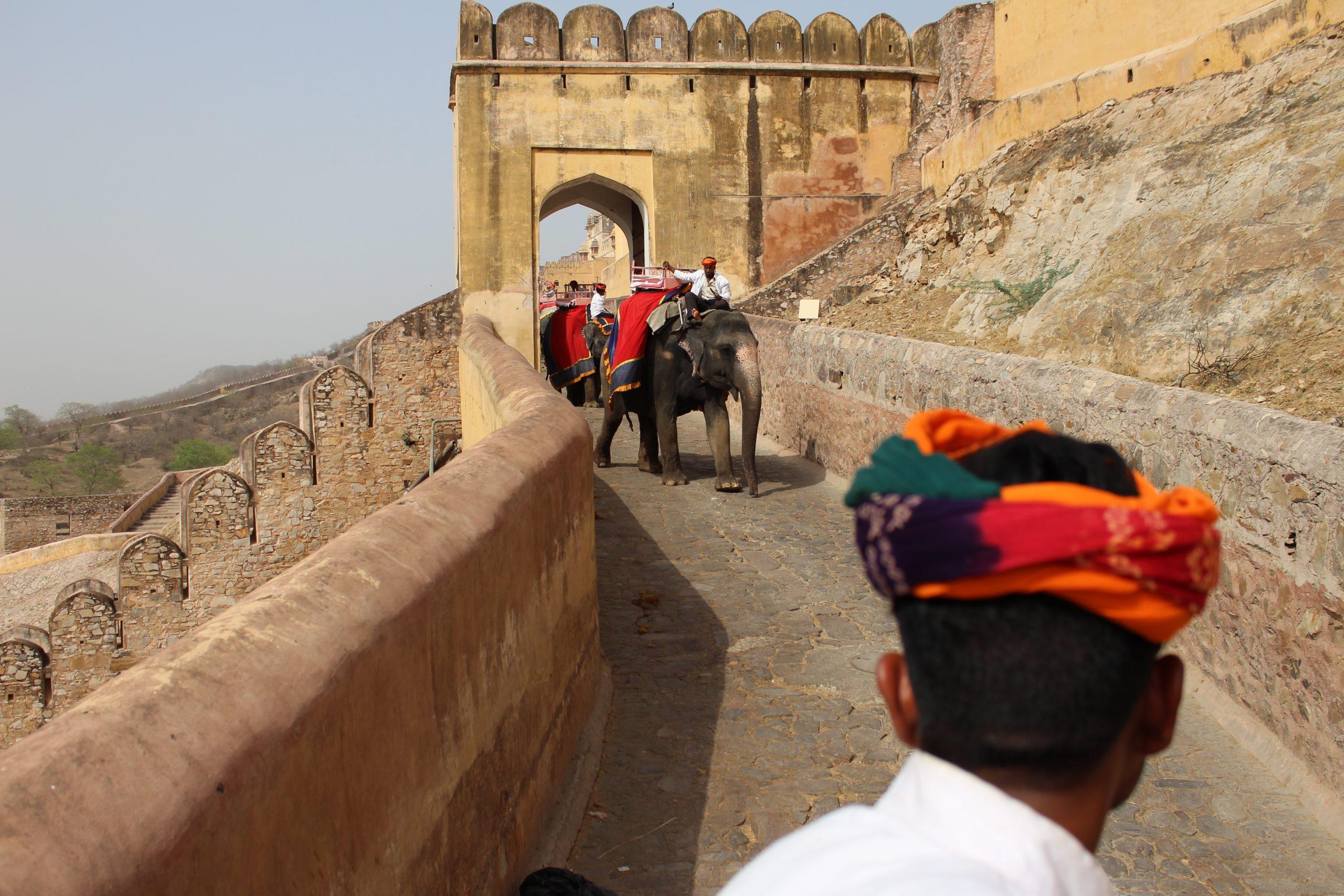amber_fort_subida_elefante