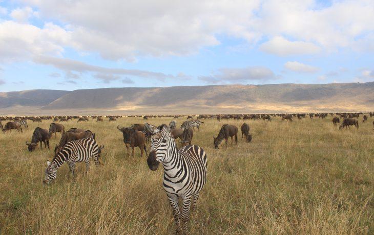 África do Sul e Tânzania: Meu roteiro pela África