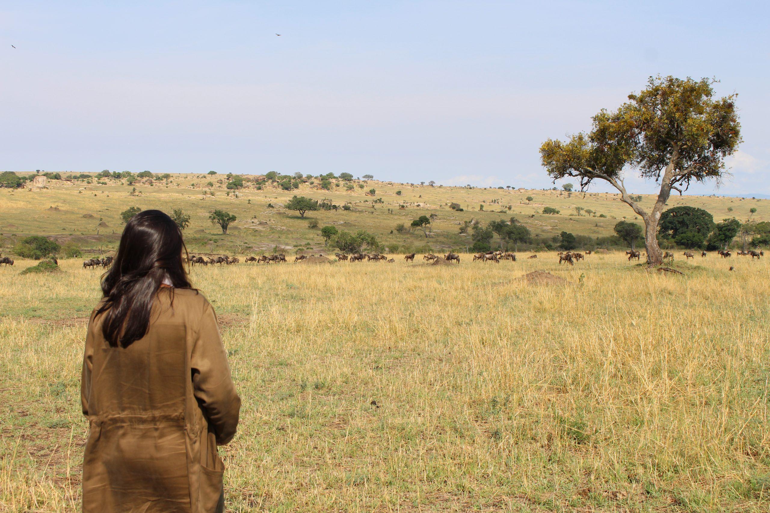 grande_migraca_serengeti