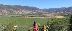 Vale do Colchagua: meu roteiro pela linda rota de vinhos do Chile