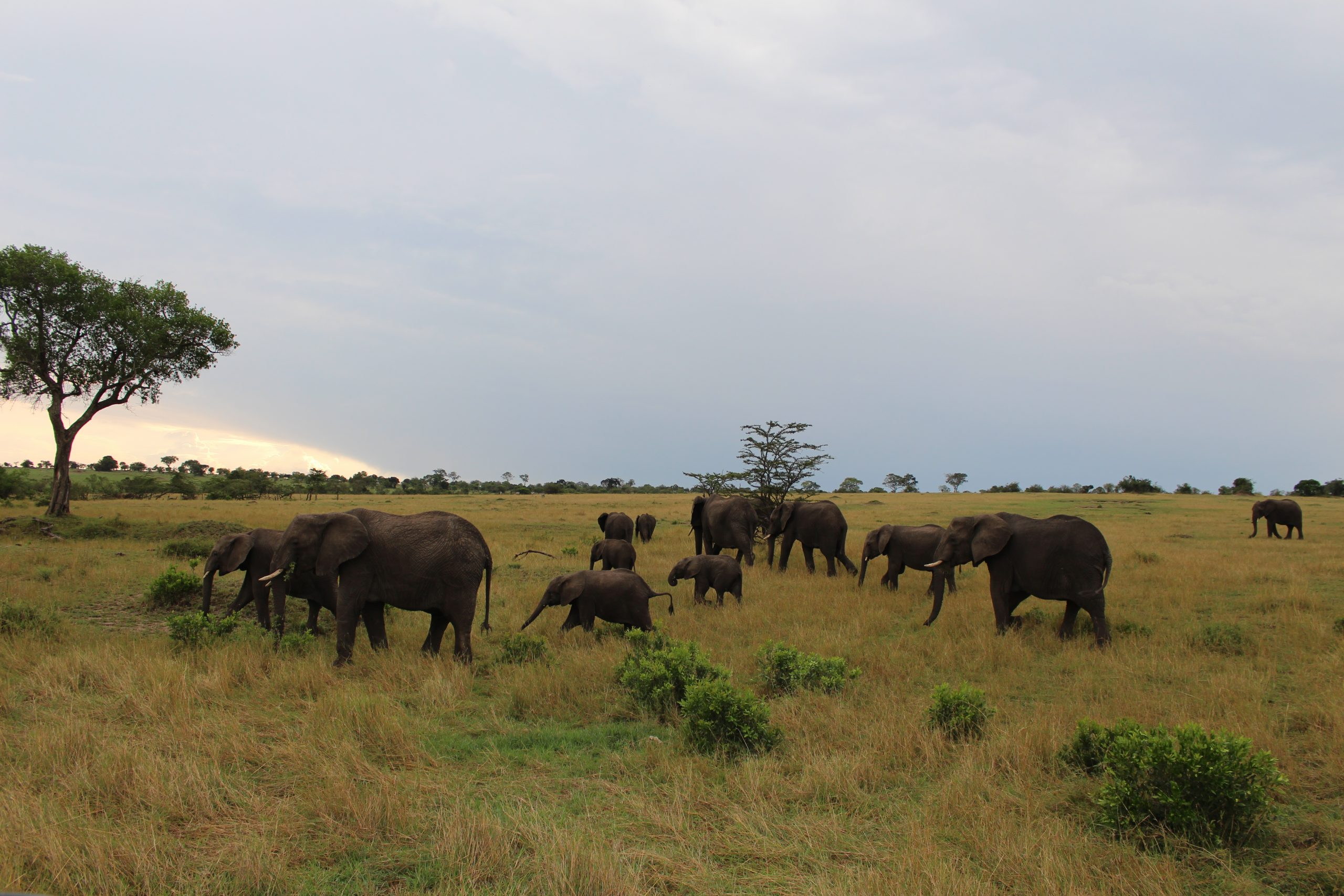 elefantes_serengeti