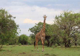 Tanzânia: Roteiro de Safári no Serengeti