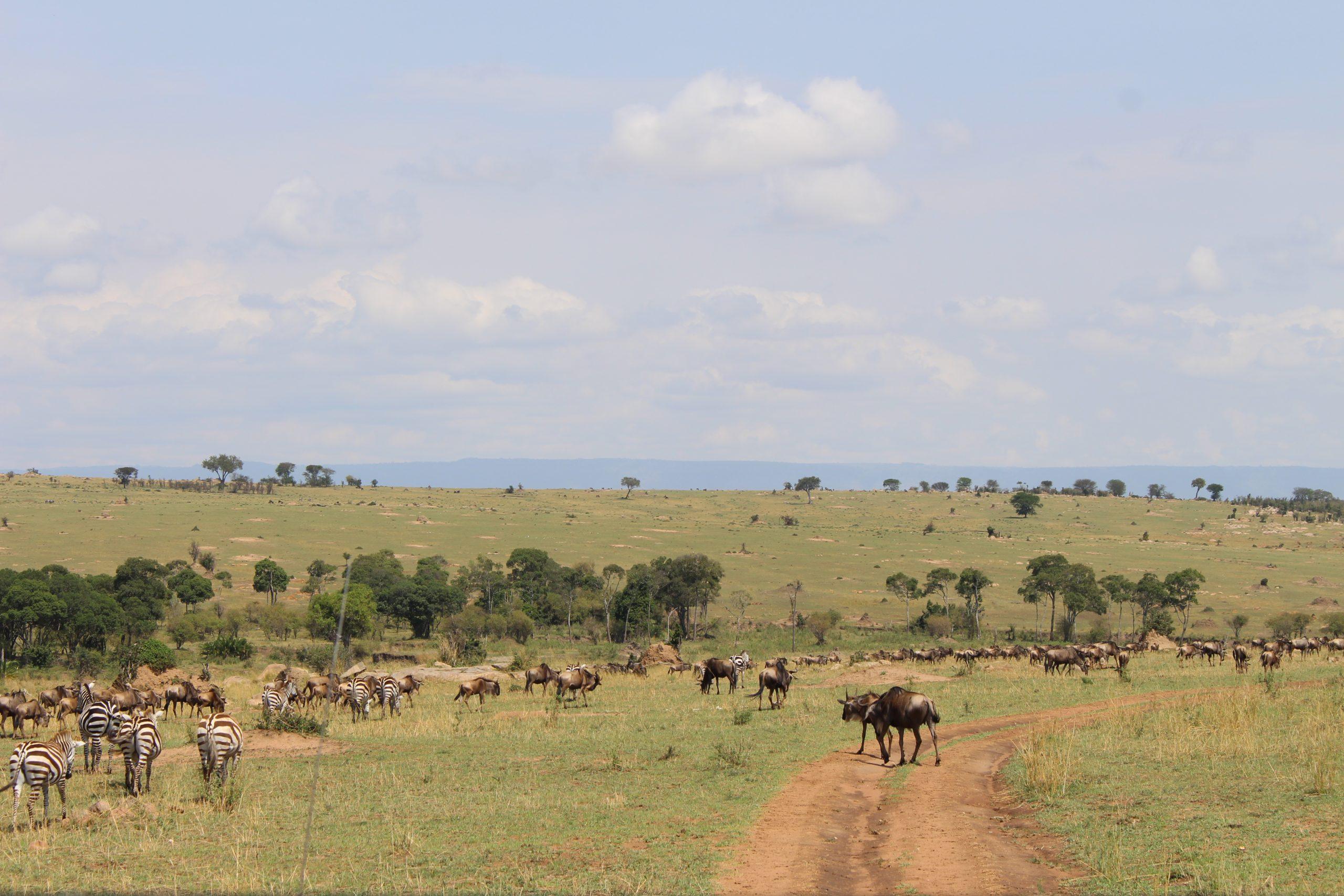 grande_migracao_serengeti