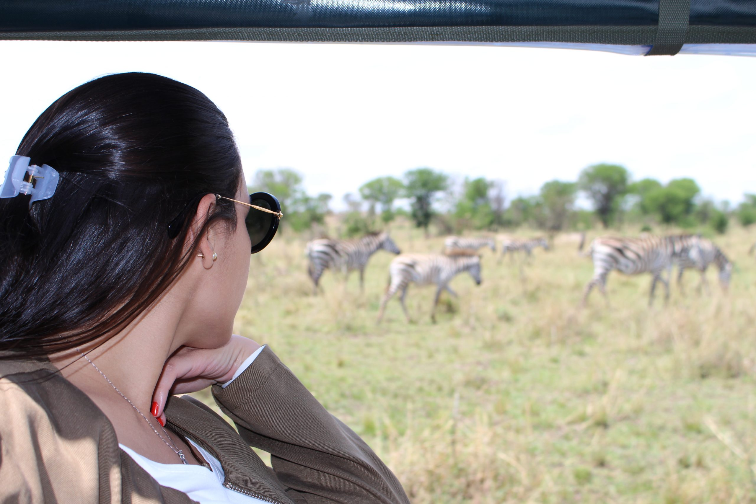 viagem_no_detalhe_zebras