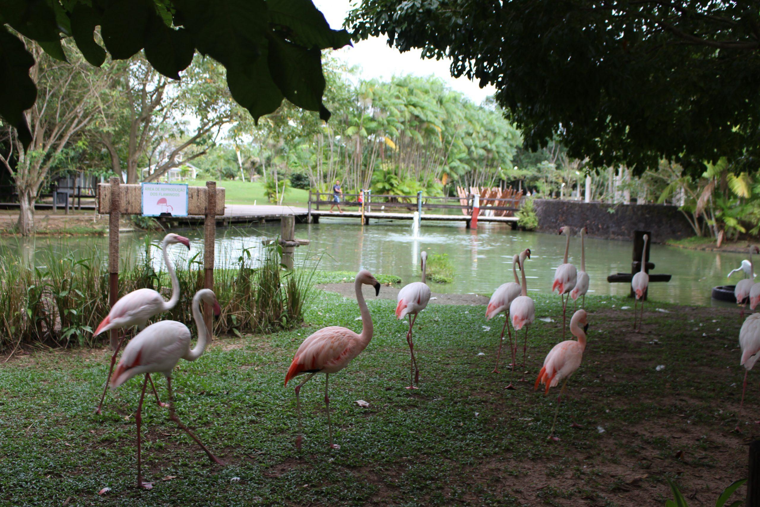 mangal_das_garcas_flamingos