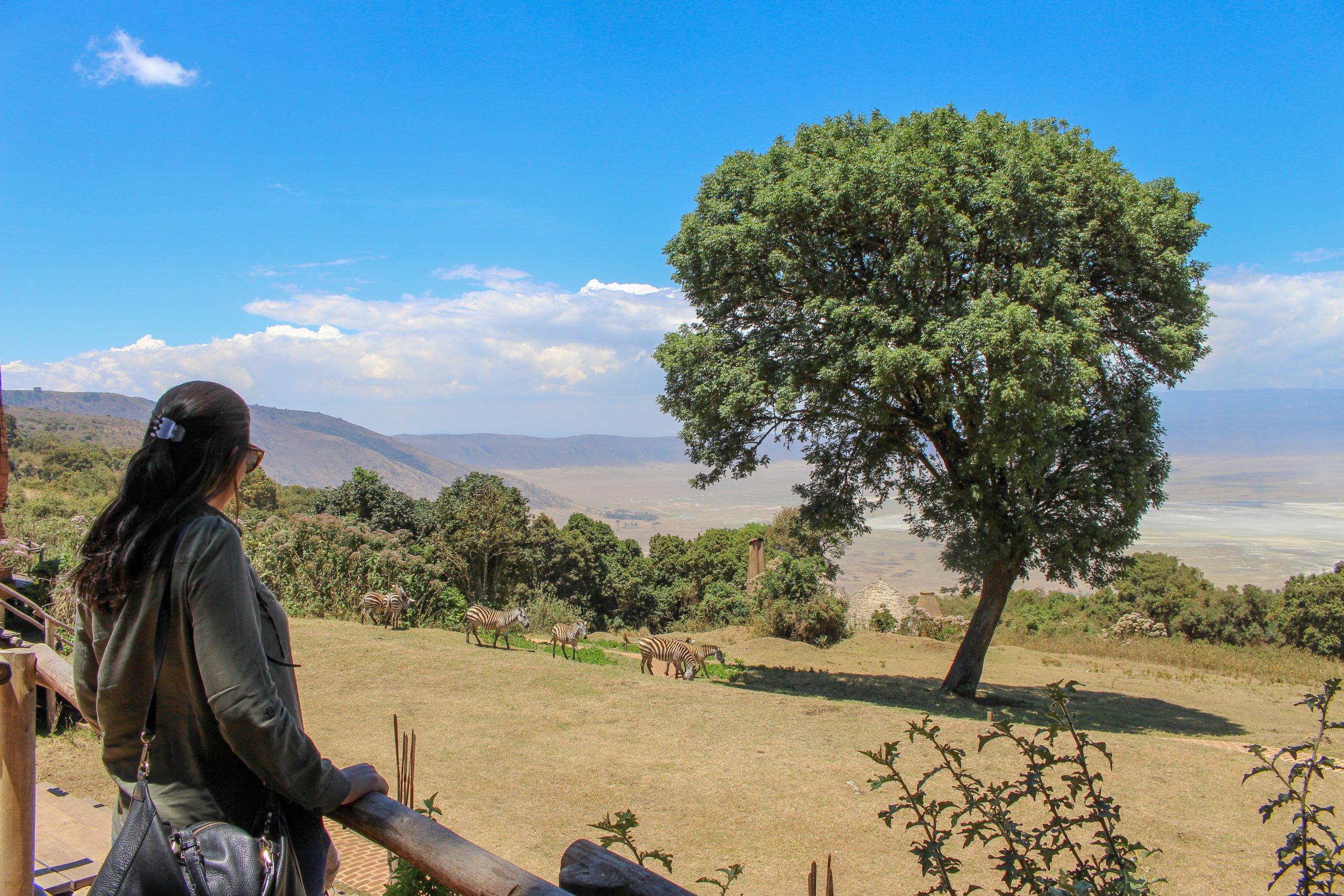 andbeyond_crater_lodge_zebras