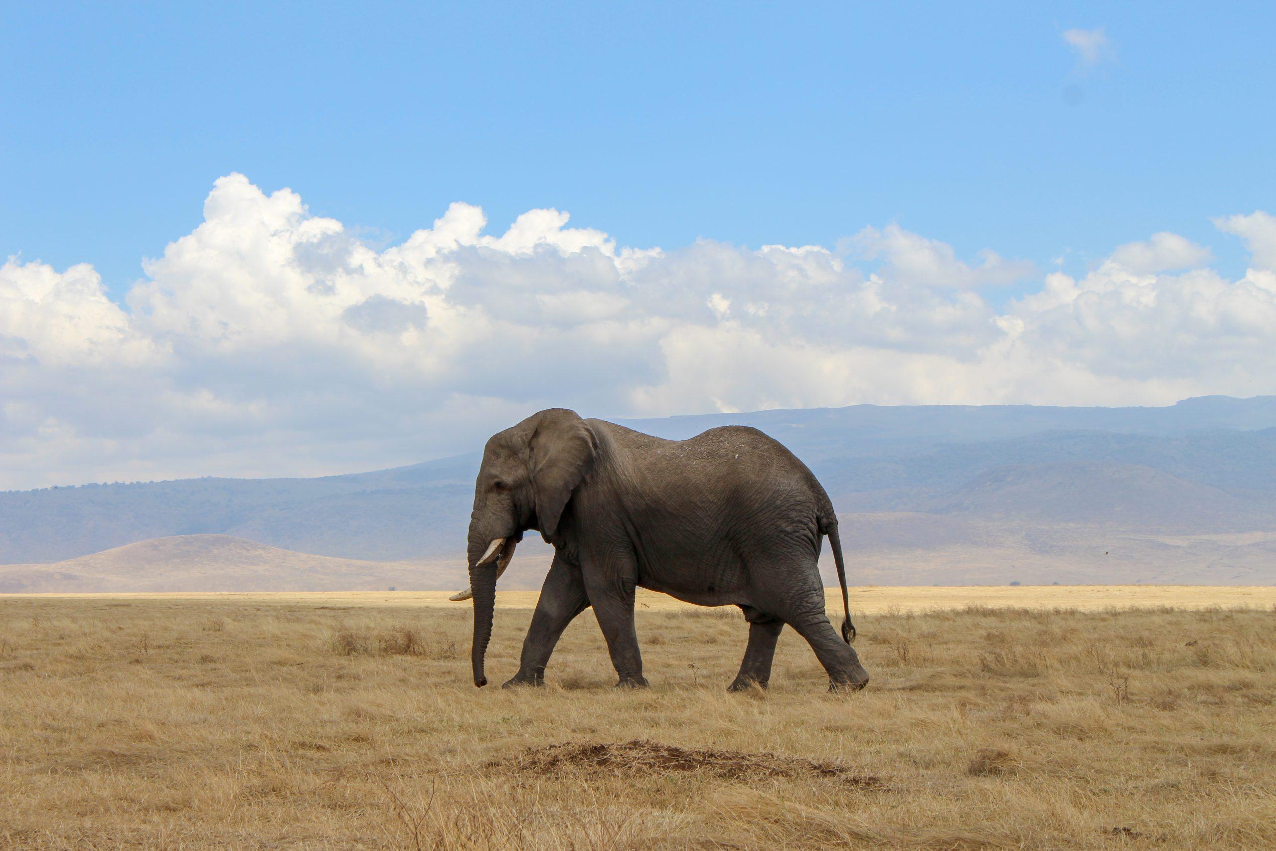 cratera_ngorongoro_elefante