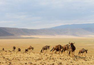 Tanzânia: Roteiro de Safári na Cratera de Ngorongoro