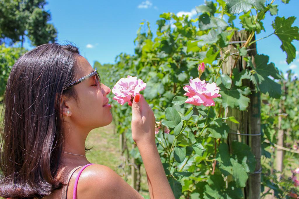pizzato_vale_dos_vinhedos_flores_vinicola