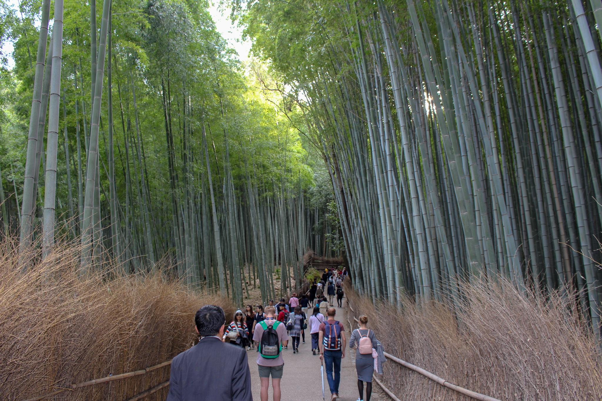 Arashiyama_floresta_bambu_kyoto