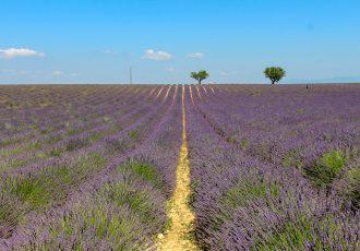 Como é visitar os campos de lavanda da Provence?