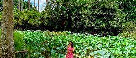 8 lugares imperdíveis para conhecer no Jardim Botânico do Rio de Janeiro